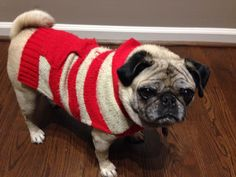 Moonpie in her first sweater of the season.
