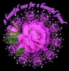 Beautiful rose for a beautiful friend