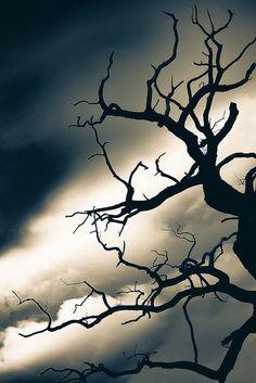 dead tree at dusk, Blickling Hall , Norfolk by Rajesh Munglani on 500px