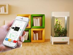 Niwa helps you cultivate veggies at home – using your smartphone #smart_living.