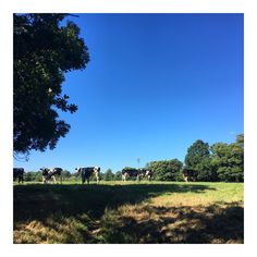 The summer is our favourite time to get out and about! We're lucky to live in such a beautiful part of the UK! #NaturalSpaFactoryTakeover #somerset #southwest #England #summertime #cowfriends