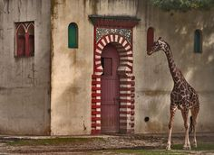 Girafa by Luís Condessa, via Flickr