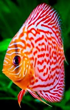 Top 5 Most Beautiful And Colorful Fish
