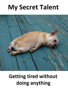after leg day.and 2 days after leg day Funny Animal Videos, Funny Animals, Cute Animals, Animal Memes, Pet Videos, Crazy Animals, Videos Funny, Viral Videos, Frases Humor