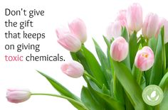 Is Your Flower Delivery Service Toxic? - http://www.mommygreenest.com/flower-delivery-service-toxic/