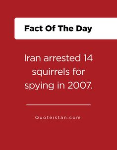 Iran arrested 14 squirrels for spying in Fact Of The Day, Quote Of The Day, Squirrels, Iran, Spy, Life Quotes, Inspirational Quotes, Facts, Motivation