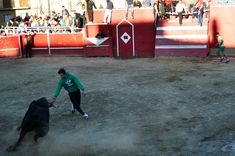 Santacara: Vacas Hermanos Arriazu - Fiestas de la Juventud (4... Wrestling, Sports, Youth, Cows, Siblings, Fiestas, September, Lucha Libre, Hs Sports