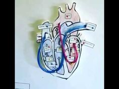 Apex International Academy - Working 3D model of the Human Heart. - YouTube