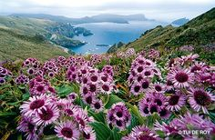 "Subantactic Islands (New Zealand). scenery like that would make me ""outdoorsy"" for once."