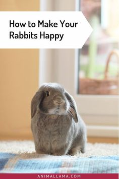 Get a few fresh ideas on how to make your pet rabbits happy! Read through our 12 ways to keep your bunnies pleased at all times! How To Make Your Rabbits Happy: 12 Ways To Keep Them Pleased Rabbit Toys, Bunny Toys, Pet Rabbit, Pet Bunny Rabbits, Baby Bunnies, Rabbit Behavior, Raising Rabbits, Pet Guinea Pigs, Bunny Care