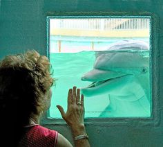 Making friends with a dolphin at the Gulfarium in Fort Walton Beach.
