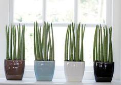 Coisas de Casa e Tal...: Jardinagem