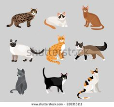 Free cat vector clip art silhouettes better to edit with Adobe Illustrator CS or Adobe Photoshop CS. This is a sample of full pack which contains 65+ designs. Download full pack visit - http://all-silhouettes.com/vectorcats/. All Free Download Vector Graphic Image from category Animal. Design by All-Silhouettes.com. File format available Ai & Csh.  Vector tagged as      Animals, beast, cat, Cat VectorArt, clip art, Clip Art Kitten, Clipart Kitten, Cute, domestic, feline, illustrator,