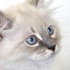 Photo Blue-eyed blonde... by Serg Semin on 500px