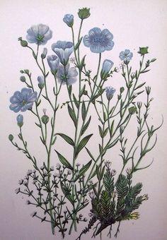 1899  Exquisite Bouquet of Garden Flowers Tree Herb  Slender