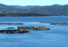 Fish farming in Australia is mostly focused on breeding fish for re-stocking streams, rivers and lakes and for cage and pond based commercial fish production. Most of the initial farms were trout and salmon farms developed to support the introduction of these exotic species into cool-water streams and lakes in Victoria, new South Wales, Tasmania and Western Australia.