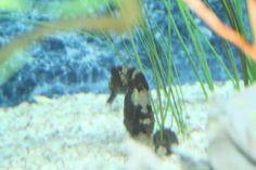 Seahorse at Pine Knolls Aquarium