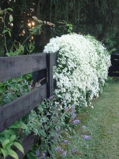 One of my favorite fall garden plants is the showy Clematis paniculata(C. One of my favorite fall garden plants is the showy Clematis paniculata(C. Not only does this beauty cov Moon Garden, Dream Garden, Amazing Gardens, Beautiful Gardens, Beautiful Moon, Beautiful Flowers, Rare Flowers, Beautiful Things, Beautiful Pictures