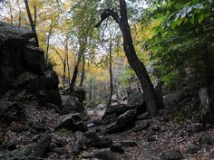 Purgatory Chasm State Park, a Massachusetts State Park located nearby Ashland, Auburn and Bellingham