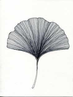 Ginkgo Leaf Print of original Black or Green Pen and Ink Drawing: