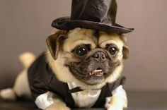 my dog will be at my wedding. no ifs ands or buts about it:)