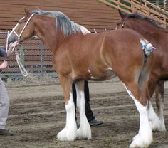 Willow Way Clarice Live Oak Omega x WIllow Way Gayle (x Torrs Cup Winner) 05.01.02