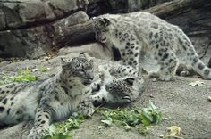 Rosamond Gifford Zoo, Syracuse NY by tredhead, via Flickr