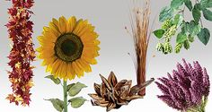 Endecken Sie eine große Auswahl an #Kunstpflanzen rund um die Themen #Spätsommer, #Ernte, #Oktoberfest, #Weinlese - für die perfekte #Herbstdeko! #Deko #Dekoration http://www.decowoerner.com/de/Saison-Deko-10715/Herbst-Halloween-10754/Herbstliche-Kunstpflanzen-11681.html