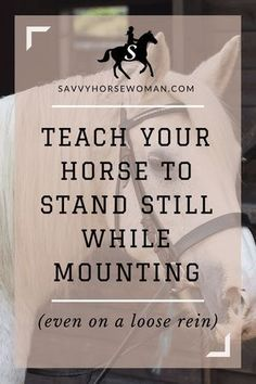Train your Horse to Stand Still While Mounting. Horse Training Tips from Savvy Horsewoman Horse Training, Training Tips, Training Quotes, Training Equipment, Training Exercises, Training Programs, Horse Information, Horse Riding Tips, Riding Gear