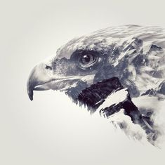 Nick Whiteley Design, Double Exposure Eagle More