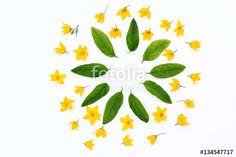 Yellow flowers shaped in a pattern on white background