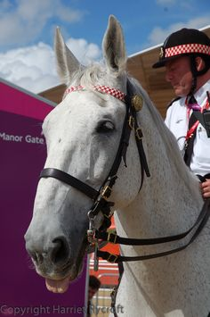 Bored police horse at the London 2012 Olympics
