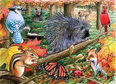 Eastern Woodlands is a 35 piece tray puzzle part of the Habitat series from Cobble Hill. Woodlands Online, Bird Migration, Woodland Christmas, Puzzle Toys, Puzzles For Kids, Woodland Creatures, Bird Houses, Habitats, Fun Facts