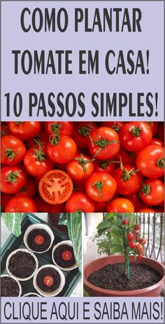 Growing Fruit Trees, Growing Seeds, Growing Plants, Growing Vegetables, Eco Garden, Vegetable Garden Design, Fruit Garden, Growing Tomatoes Indoors, Growing Tomatoes In Containers