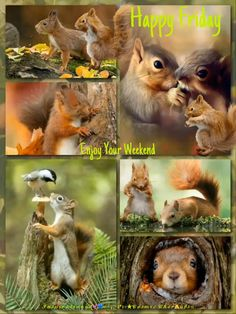 Funny Squirrel Pictures, Funny Animal Pictures, Funny Cute Cats, Cute Funny Animals, Rare Animals, Zoo Animals, Funny Dog Memes, Funny Dogs, Funny Animal Videos