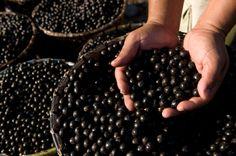 Açai, frutto miracoloso che pare aiuti a perdere i chili di troppo.    http://www.amando.it/casa-cucina/ricette/alimenti/acai-frutto-miracoloso-moda-passeggera.html