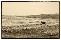 Cattle rancher in the Nebraska Sandhills.