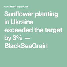Sunflower planting in Ukraine exceeded the target by 3%  — BlackSeaGrain