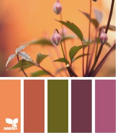 Nature Hues - http://design-seeds.com/index.php/home/entry/nature-hues1