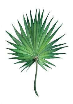 Image of Fan Palm Watercolor Plants, Watercolor Leaves, Plant Wallpaper, Flower Wallpaper, Tropical Leaves, Tropical Flowers, Plant Texture, Green Colour Palette, Plant Drawing