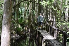 Step into adventure at Highlands Hammock State Park! A must-visit!