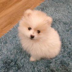 So. Fluffy.