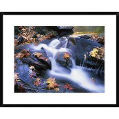 """Global Gallery 'Autumn Leaves' Framed Photographic Print Size: 24"""" H x 30"""" W x 1.5"""" D"""