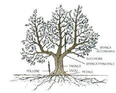 Olive Tree, Dandelion, Succulents, Bonsai, Gardens, Plants, Outdoor, Olive Oil, Beautiful