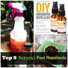 Top 9 Natural Pest Repellents