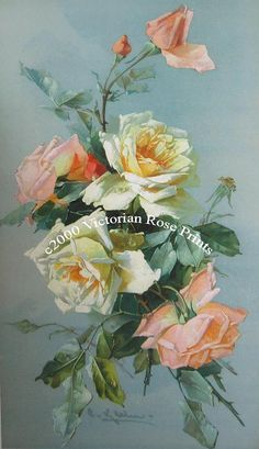 *FREE SHIPPING* This lovely vertical study of Victorian roses is by the Victorian artist, Catherine Klein. Look closely, there are dewdrops