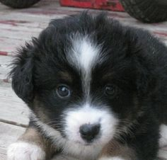 2503 Best Puppies And Kitties Images In 2019 Cute Puppies Cute
