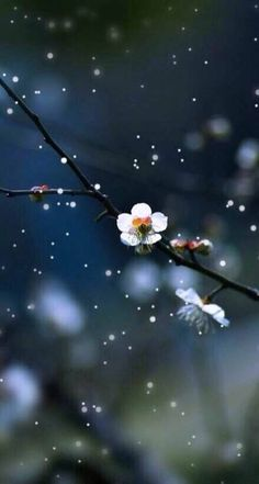 Elegant meaning - # meaning Beautiful Flowers Wallpapers, Beautiful Nature Wallpaper, Beautiful Images, Beautiful People, Flower Backgrounds, Flower Wallpaper, Wallpaper Backgrounds, All Nature, Amazing Nature