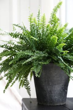DIY Concrete planter? Fresh Farmhouse | Potted Fern