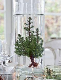 baby tree w/ roots in vase under water